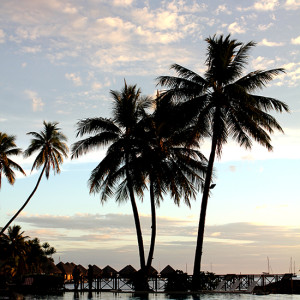 Cocotiers - Polynesie